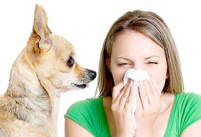 средство от аллергии на шерсть  Одесса аптека