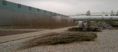 дрова на заводе
