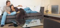как избавиться от шерсти в доме и от запаха